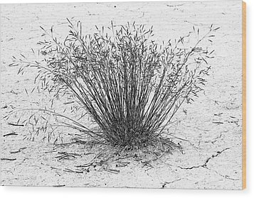 Death Valley National Park - Hot - Dry - Beautiful Wood Print by Christine Till