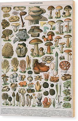 Decorative Print Of Champignons By Demoulin Wood Print by American School