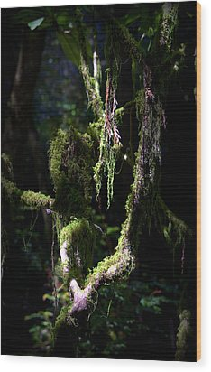 Wood Print featuring the photograph Deep In The Forest by Lori Seaman