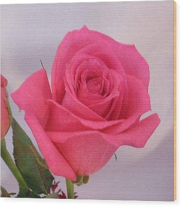 Deep Pink Rose Wood Print by Karen J Shine