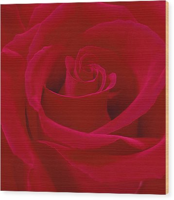 Deep Red Rose Wood Print by Mike McGlothlen