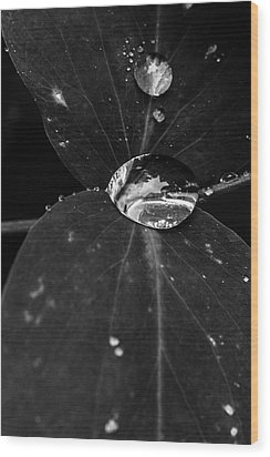 Wood Print featuring the photograph Deep Refraction Between Leaves by Darcy Michaelchuk