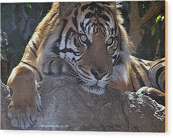 Deep Thought Wood Print by KatagramStudios Photography
