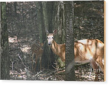 Deer And Fawn In The Woods Wood Print by David Bishop