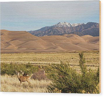 Wood Print featuring the photograph Deer And The Colorado Sand Dunes by James BO Insogna