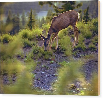 Deer At Crater Lake, Oregon Wood Print by John A Rodriguez