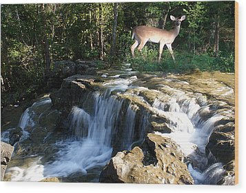 Wood Print featuring the photograph Deer At The Falls by Rick Friedle