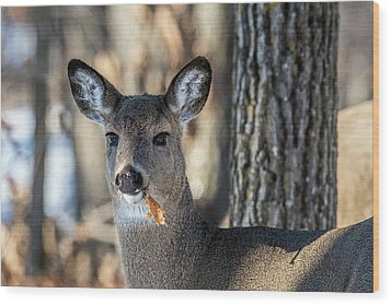 Wood Print featuring the photograph Deer At The Salad Bar by Paul Freidlund