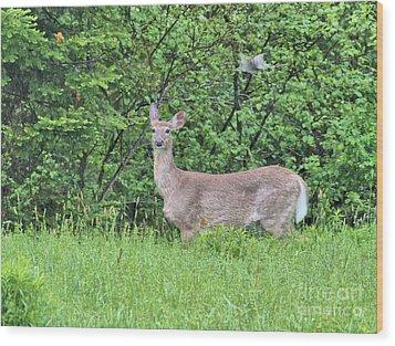 Deer Wood Print by Debbie Stahre