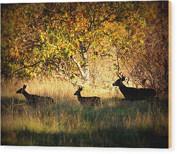 Deer Family In Sycamore Park Wood Print by Carol Groenen