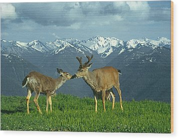 Ma-181-deer In Love  Wood Print