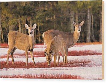 Deer In Snow Wood Print by Debbie Stahre