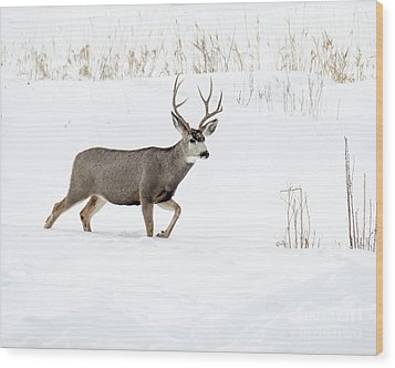 Wood Print featuring the photograph Deer In The Snow by Rebecca Margraf