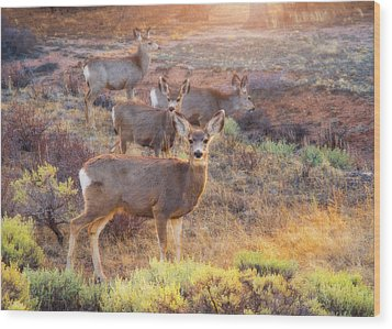 Wood Print featuring the photograph Deer In The Sunlight by Darren White