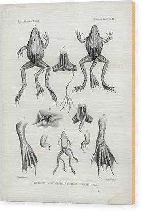 Deformed Frogs - Historic Wood Print by Joseph Huet