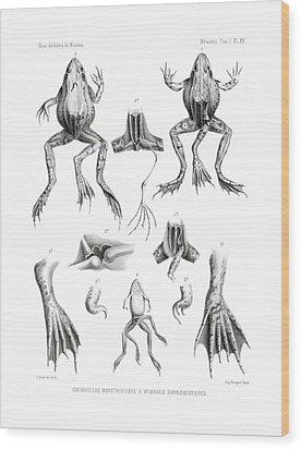 Deformed Frogs Wood Print by Joseph Huet