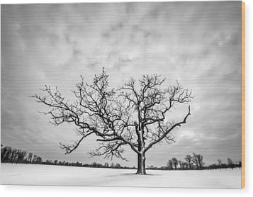 Wood Print featuring the photograph Delaware Park Winter Oak by Chris Bordeleau