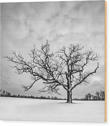 Wood Print featuring the photograph Delaware Park Winter Oak - Square by Chris Bordeleau