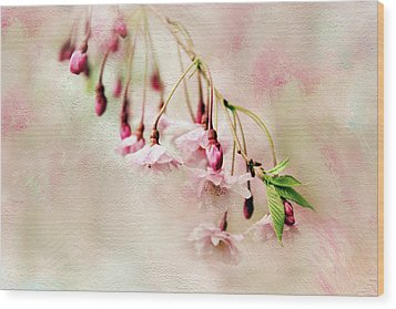 Wood Print featuring the photograph Delicate Bloom by Jessica Jenney