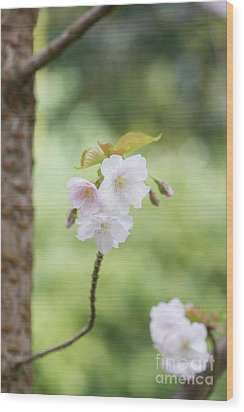 Wood Print featuring the photograph Delicate Blossom by Tim Gainey