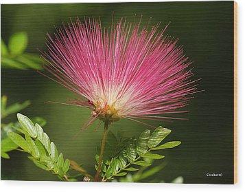Delicate Pink Bloom Wood Print by Gary Crockett