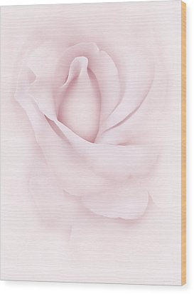 Delicate Pink Rose Flower Wood Print by Jennie Marie Schell