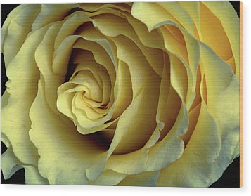 Delicate Rose Petals Wood Print