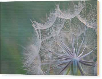 Wood Print featuring the photograph Delicate Seeds by Amee Cave