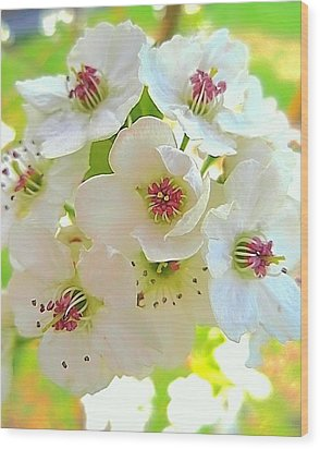 Delicate White Blossoms Wood Print by Beth Akerman