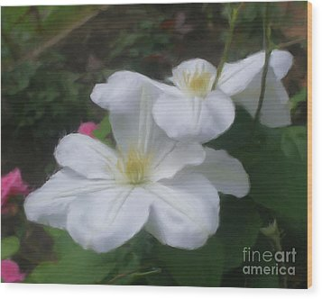 Wood Print featuring the painting Delicate White Clematis Pair by Smilin Eyes  Treasures