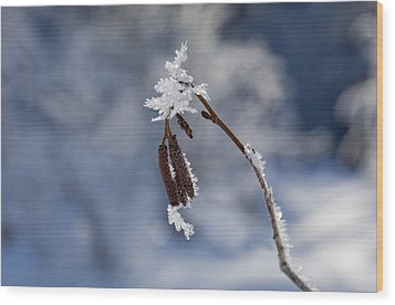 Delicate Winter Wood Print by Mike  Dawson
