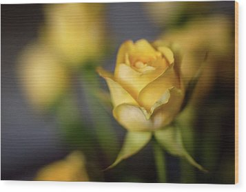Wood Print featuring the photograph Delicate Yellow Rose  by Terry DeLuco