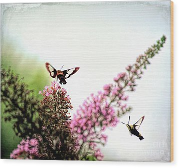Wood Print featuring the photograph Delight And Joy - Hummingbird Moths In Flight by Kerri Farley