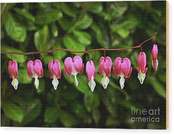 Delightful Bleeding Hearts Flowers Wood Print