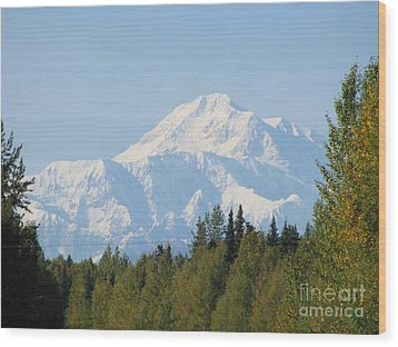 Denali Framed By Trees Wood Print