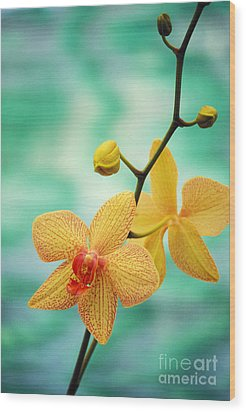 Dendrobium Wood Print by Allan Seiden - Printscapes