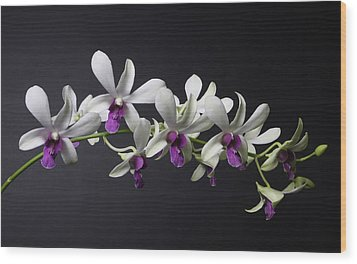 Dendrobium Orchid Wood Print by Lynn Berreitter