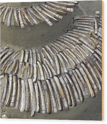 Denmark, Romo, Seashells, Razor Clams Wood Print by Keenpress