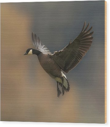 Wood Print featuring the photograph Descending Goose by Angie Vogel