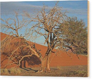 Desert Beauty Wood Print by Joe  Burns