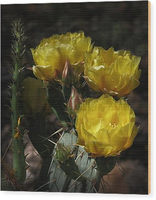 Desert Blooming Wood Print by Elaine Malott