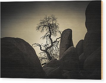 Desert Bonsai Wood Print