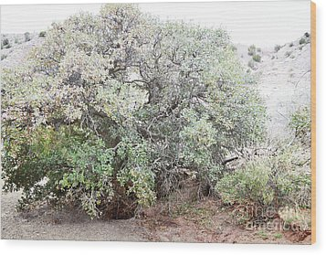 Wood Print featuring the photograph Desert Canyon Tree by Andrea Hazel Ihlefeld