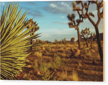Desert Fan Wood Print