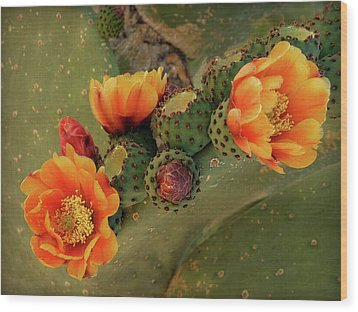 Wood Print featuring the photograph Desert Flame by Lucinda Walter