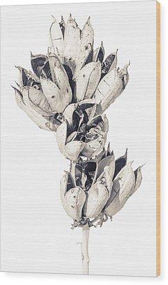 Desert Flower Wood Print by Racheal Christian