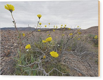 Wood Print featuring the photograph Desert Gold In Blossom by Dung Ma