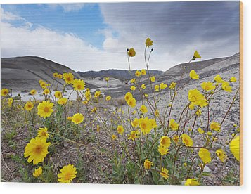 Wood Print featuring the photograph Desert Gold In Death Valley by Dung Ma