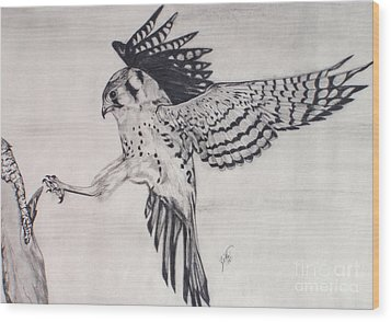 Wood Print featuring the drawing Falcon I by Suzette Kallen