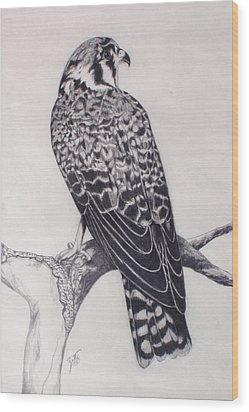 Desert Hawk II Wood Print